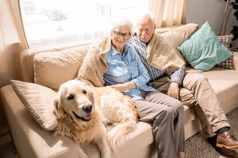 benefits of having a dog - seniors