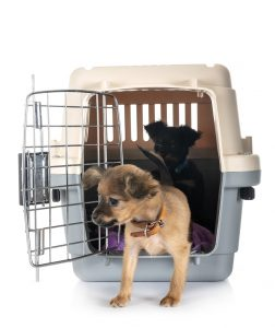 crate training for a flight - moving with dogs