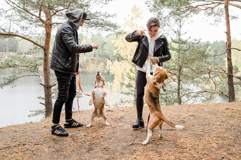 dog Enhance Our Joy