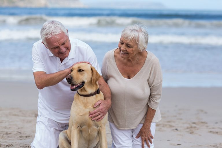 dog Increases seniors Mobility and Independence