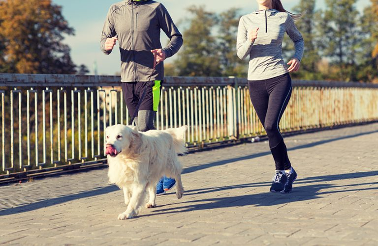 dog Motivate Us to Exercise More