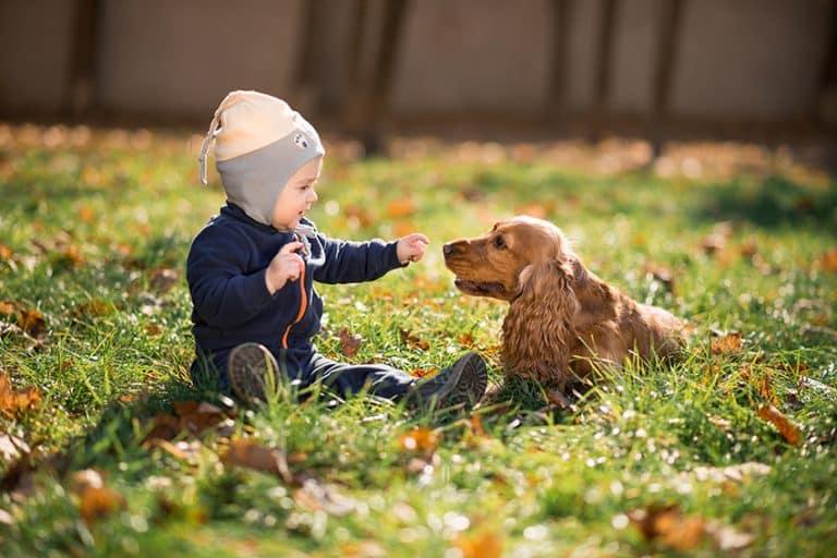 dog Teaching Respect