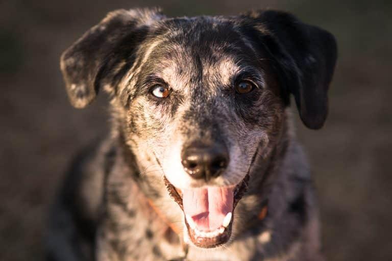 dog dna test mixed breeds