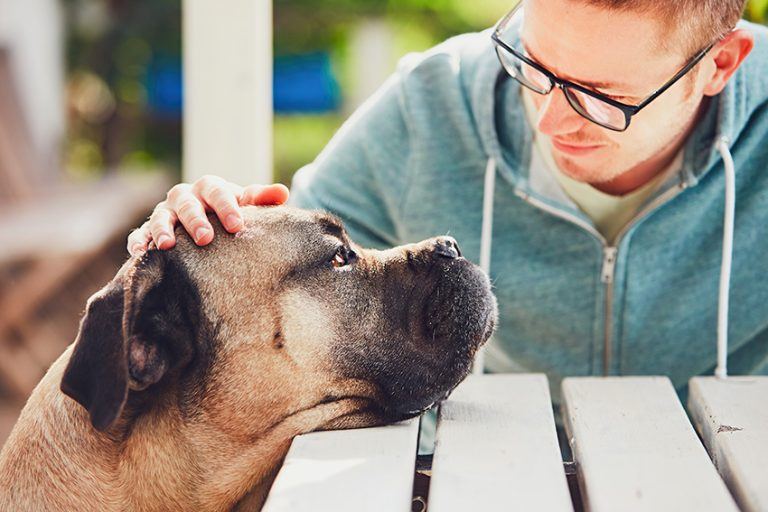 dog help Reduce Stress