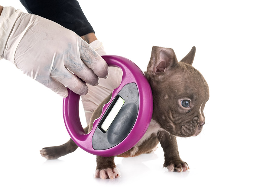 dog microchip