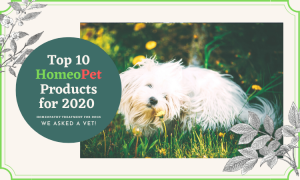 homeopet reviews homeopathy for dogs