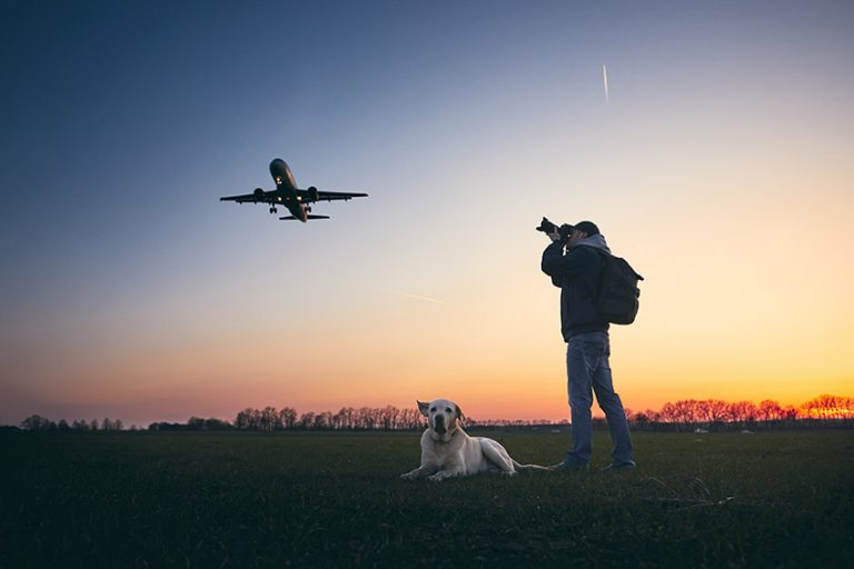 moving with dogs by flight