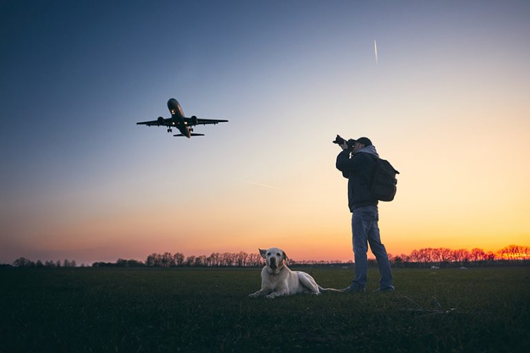 moving with dogs by plane