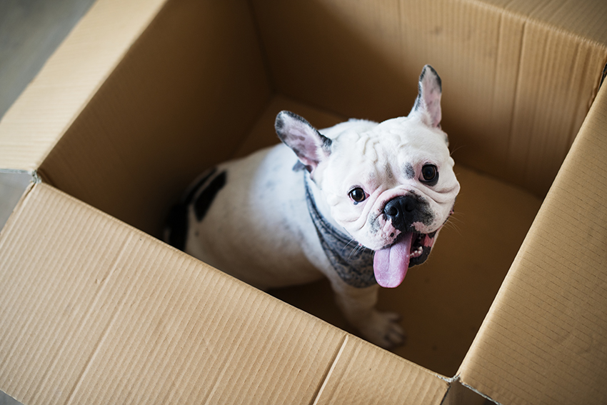 moving with dogs - involve your dogs in the packing