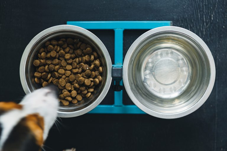 tips to choose the best dog food for hypothyroidism
