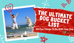 The Ultimate Dog Bucket List- 104 fun things to do with your dog