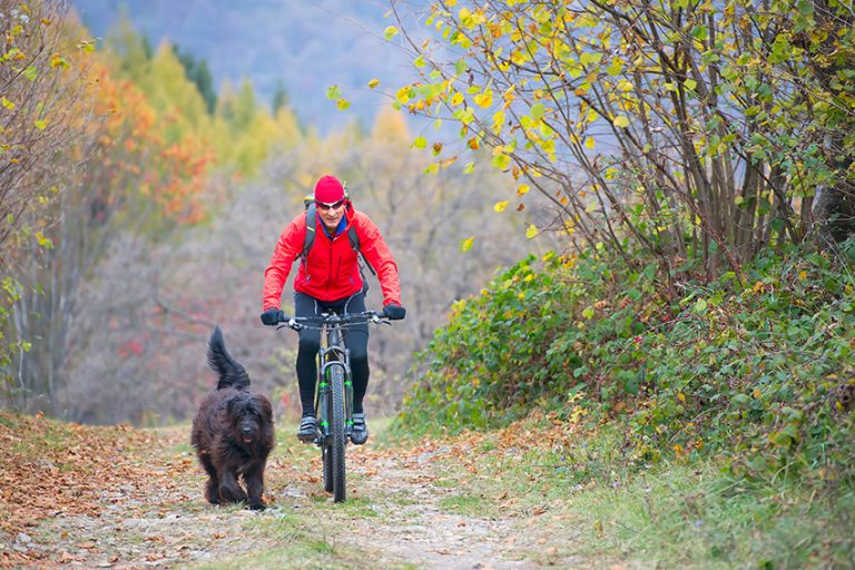 bike with your dog