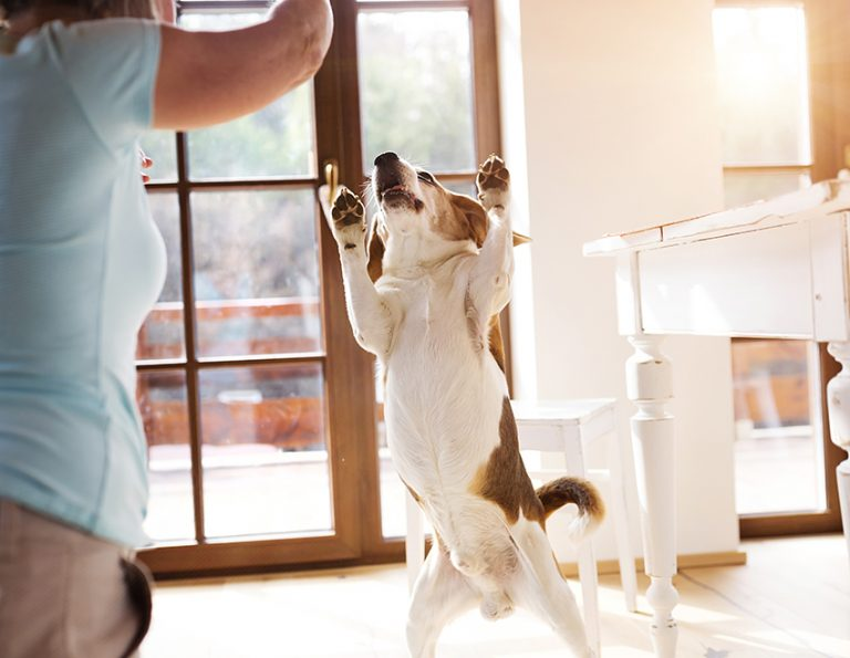 indoor activities to do with your dog