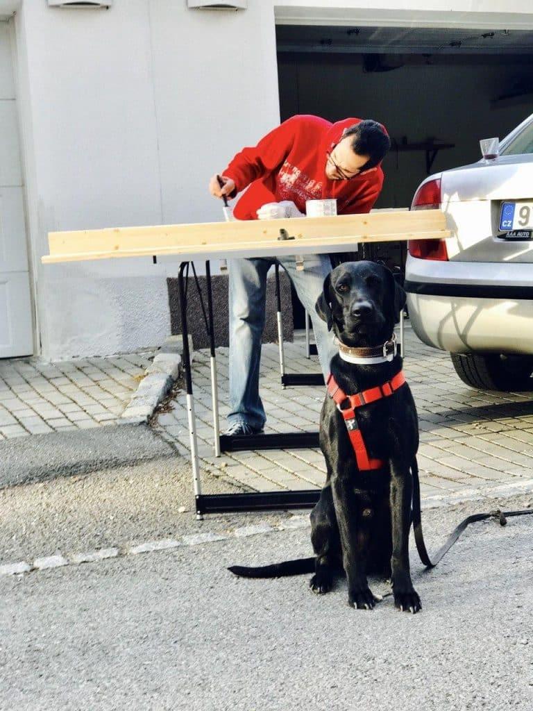 Create a dog window seat with ramp