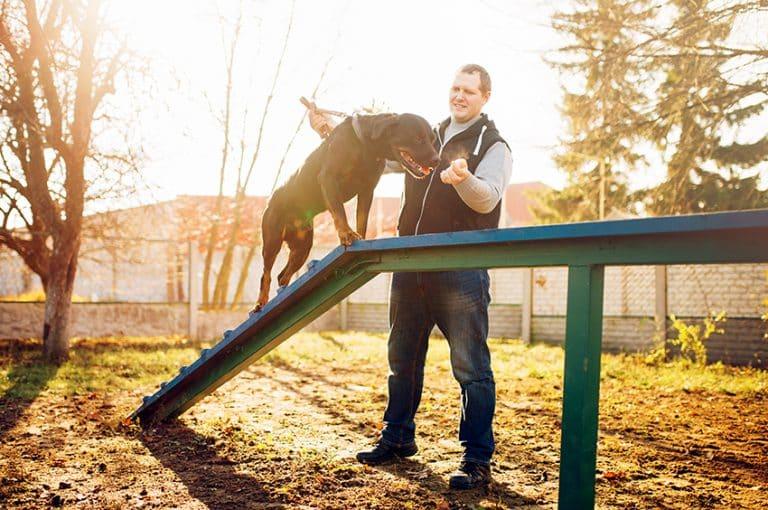 teach your dog new tricks