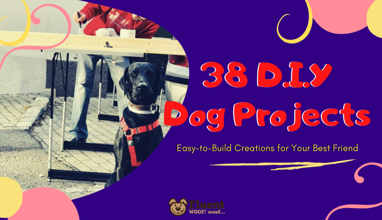 38 DIY Dog Projects
