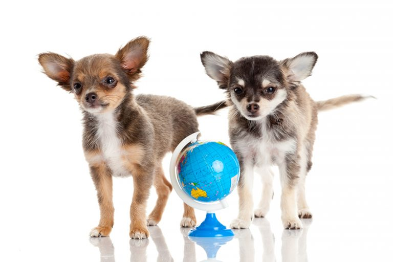 Dogs and Coronavirus Across the Globe
