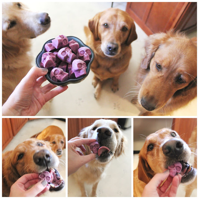 Frozen Blueberry Skull Dog Treats