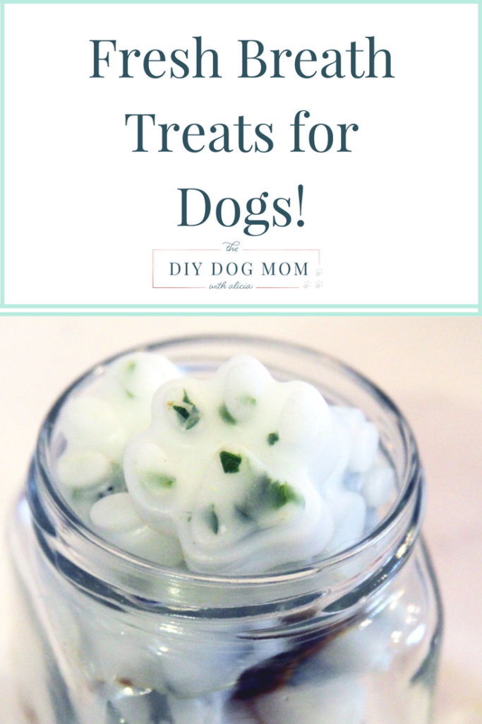 Keep Your Dogs Breath Fresh With DIY Treats