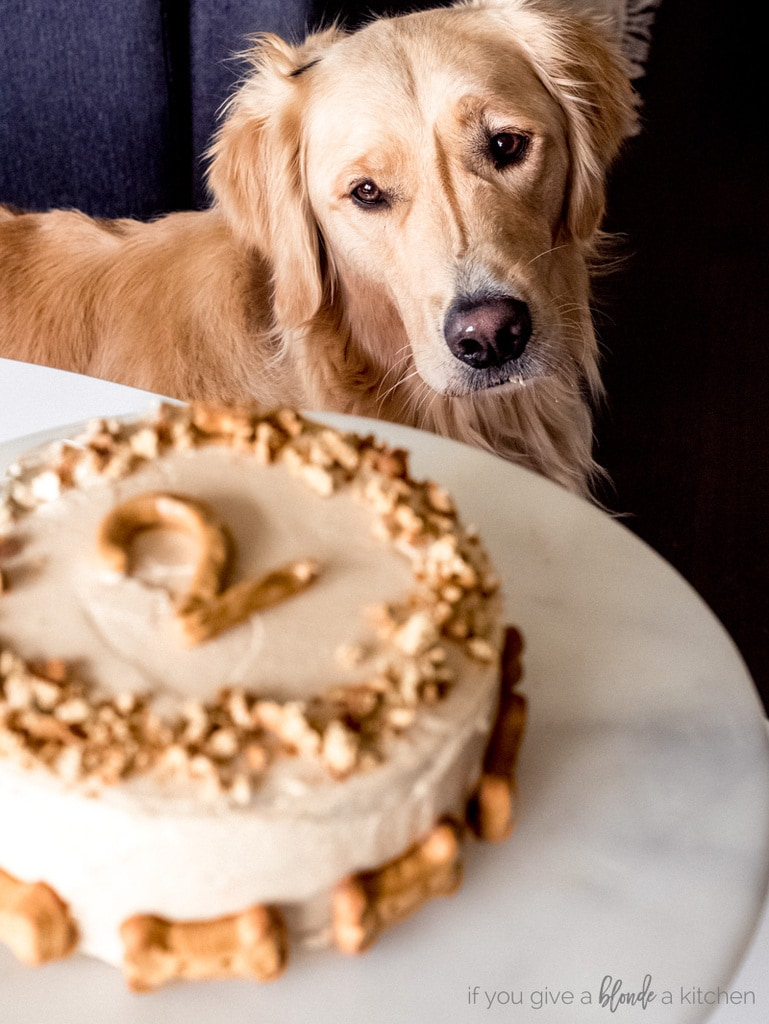 Pumpkin Dog Cake Recipe