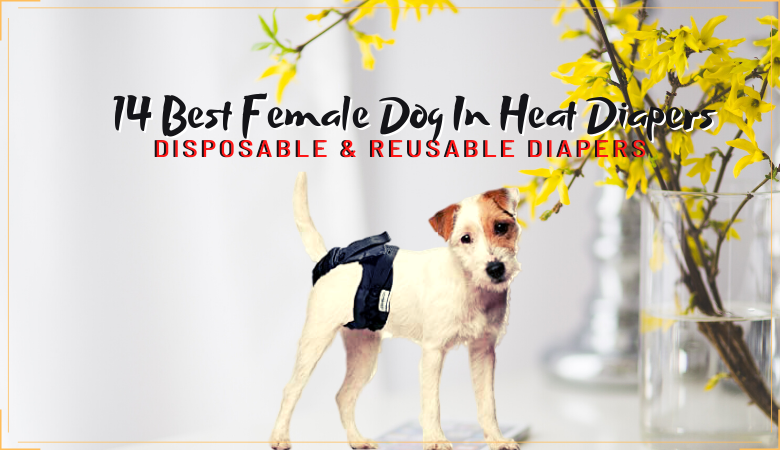 female dog in heat diapers