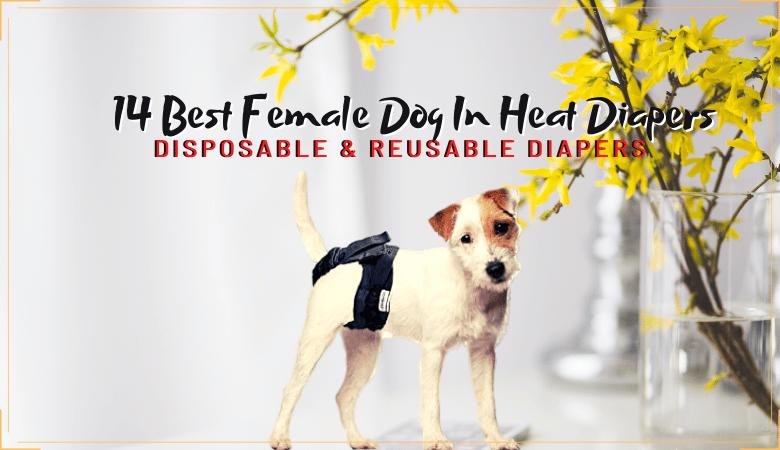 female dog in heat diapers