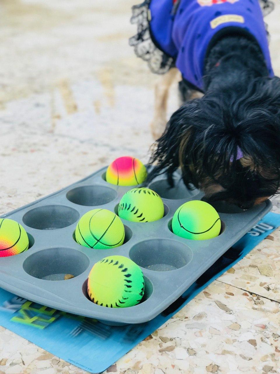 38 Diy Dog Projects Easy To Build Creations For Your Pup
