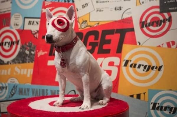 Bullseye the Miniature Bull Terrier dog breed Target