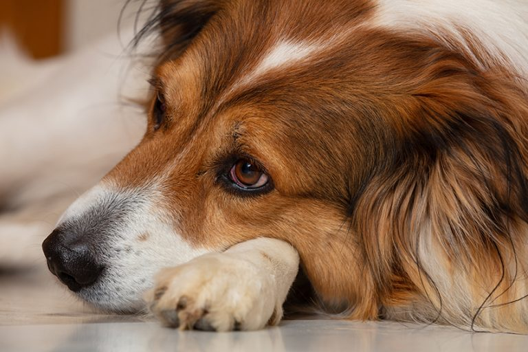 Does my dog really need flea and tick medications?