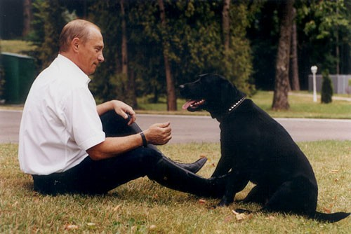 Konni the Labrador Retriever dof breed Vladimir Putins