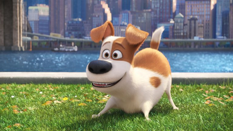 Max, the Terrier Mix breed secret life of pets
