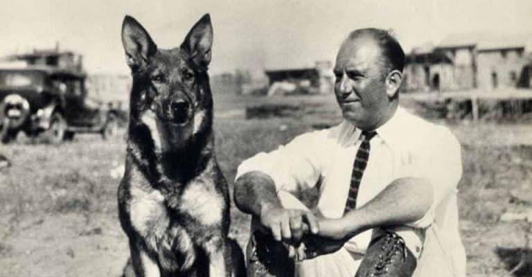 Rin Tin Tin, a German Shepherd breed