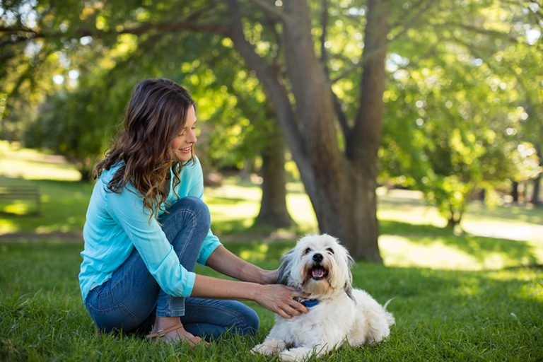 Understanding Hemp Oil for Dogs