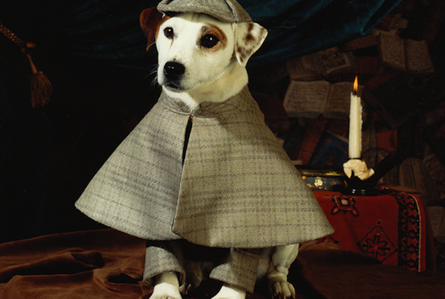 Wishbone the Jack Russell Terrier dog breed 2
