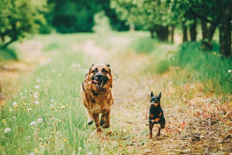 best mulch for a dog run
