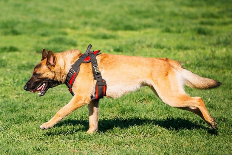 best dog running harness