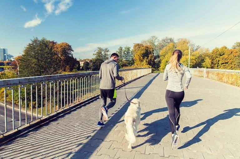 the winner - dog running harness