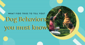 understanding dog behavior