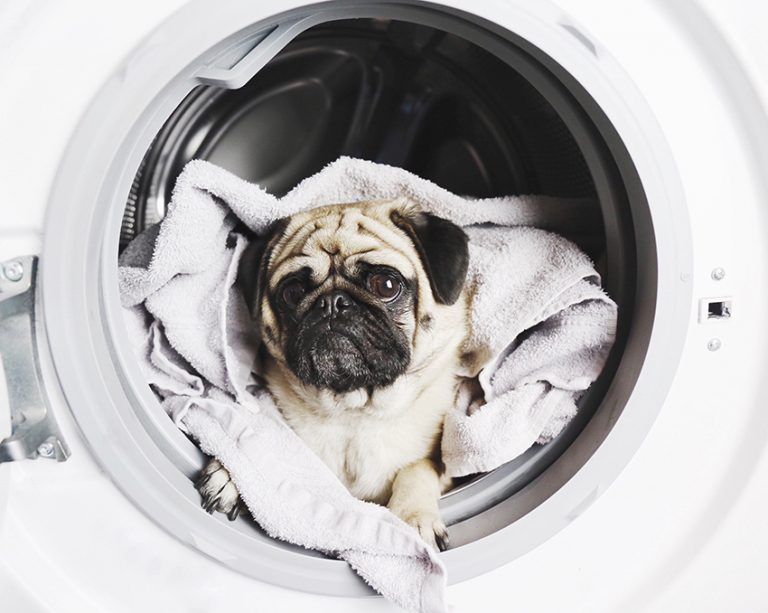 Pet-Safe Essential Oils for Fresh Laundry