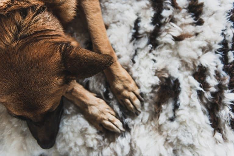 best hypoallergenic dog bed