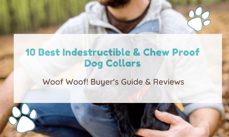 chew proof dog collar