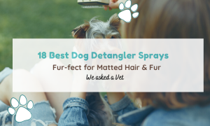 dog detangler spray
