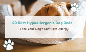 hypoallergenic dog beds
