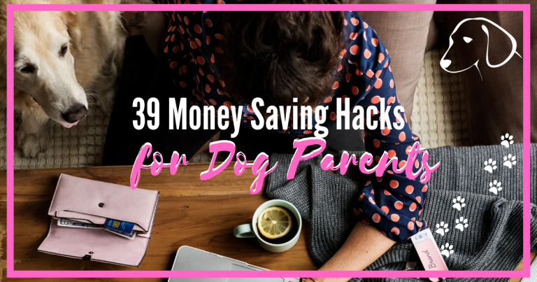 money saving tips for dog owners