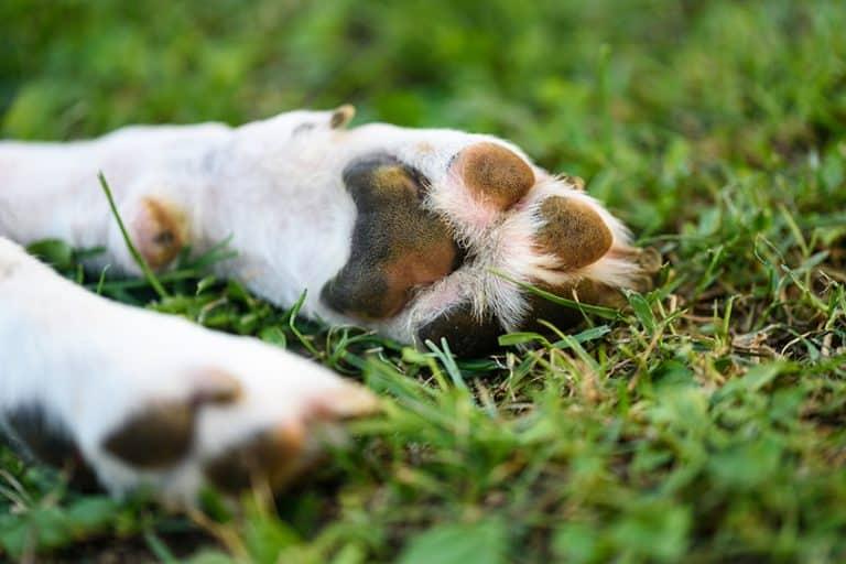 practice paw hygiene