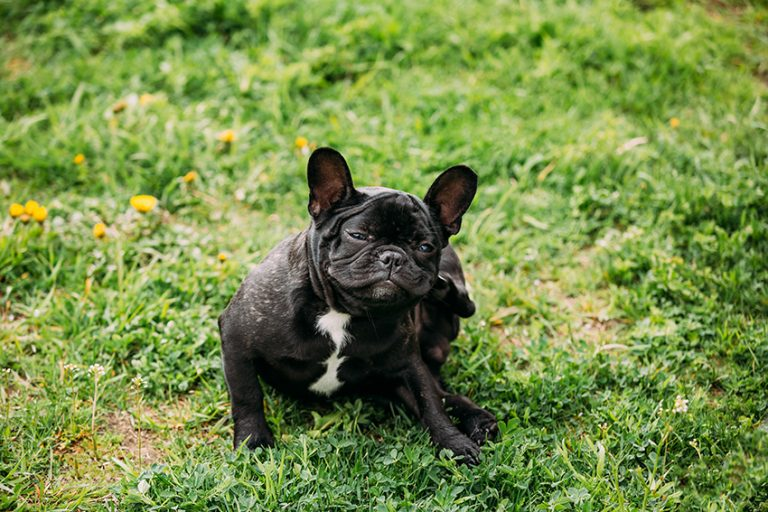 tips for reducing dust mite exposure in dogs