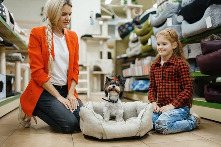top 20 hypoallergenic dog beds
