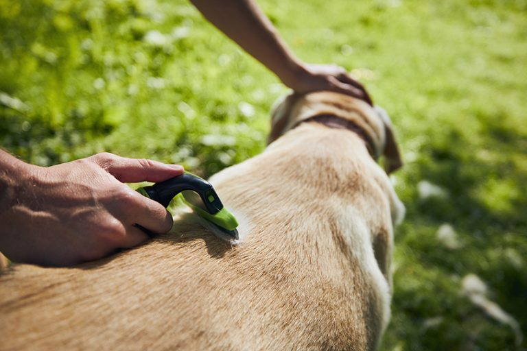 what is dog detangling spray