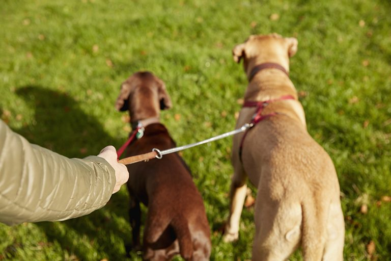 Leash Chewing - The Problem and Some Solutions