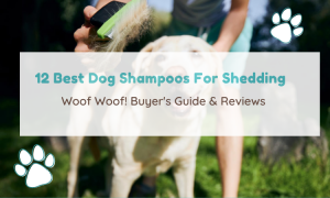 dog shampoo for shedding